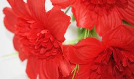 Где купить розы оптом в ижевске доставка цветов в ростове и области